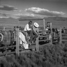 """Jaybirds, IL Ranch, NV"" by Adam Jahiel - Silver Gelatin Print, $900"