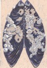 """Mussel Shell"" by Helen K Davie - Reduction Linoleum Print"