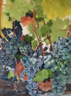 """Fruit of the Vine"" by Duane Anderson - Watercolor, $850"